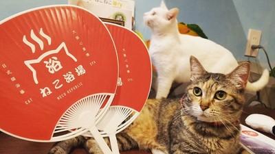 抱著貓泡足湯!大阪「貓浴場」讓你吸貓吸到飽 還能認養主子回家
