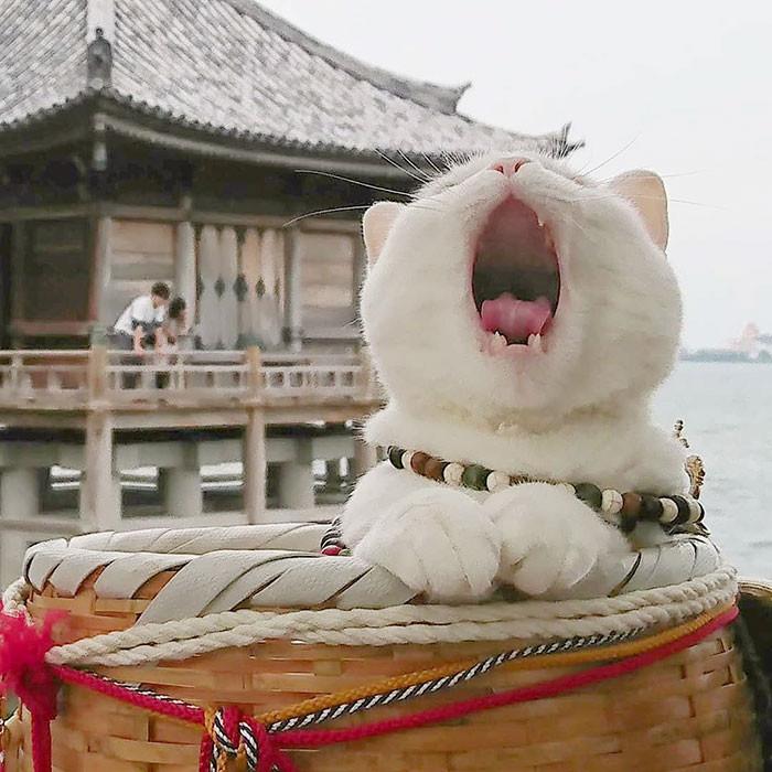 ▲▼貓貓神社。(圖/翻攝自Instagram/nekojizo)
