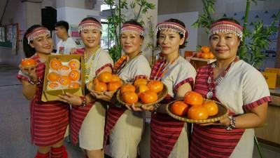 甜柿熟了! 五峰鄉甜柿節熱鬧登場