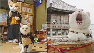 住持是隻貓!京都「貓貓寺」狂吸粉 我大喵教信徒全都超虔誠