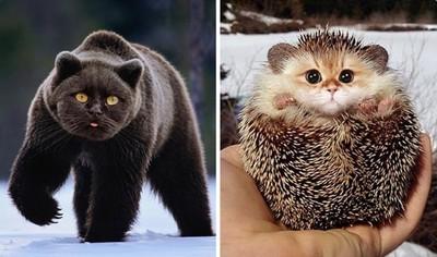 神人把動物都P貓臉 無違和感更可愛
