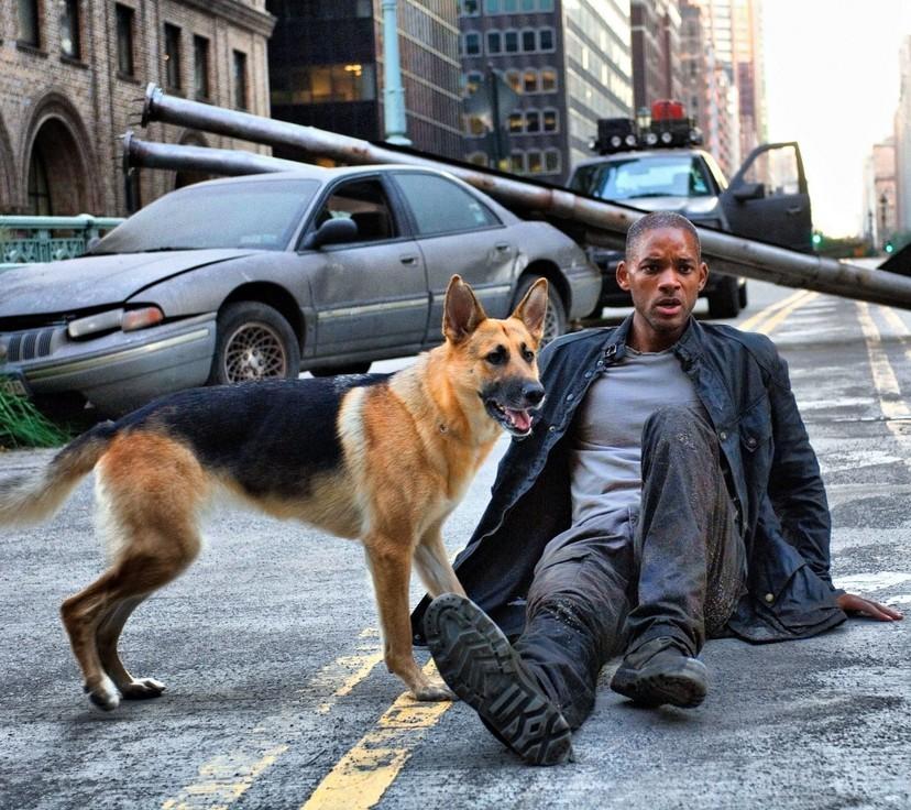 威爾史密斯 好萊塢頭號愛狗好男人 5隻兇猛的羅威納犬是最忠實家人