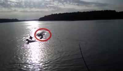 主人帶3狗玩水 目睹鱷魚活吞愛犬