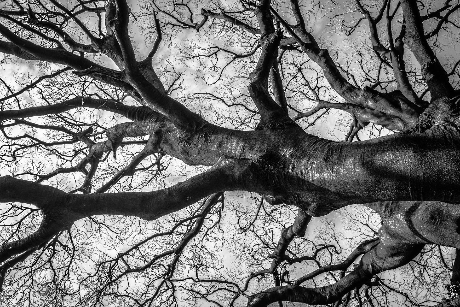 ▲▼王立偉拿樹枝插入韓國女性的陰部(示意圖/Pixabay)