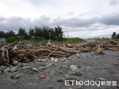 花蓮開放海灘漂流木撿拾 限在籍居民