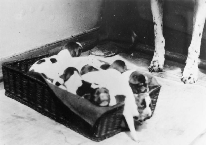 什麼天使汪?「戰俘狗」偷送食物進牢營 軍艦沉船還幫忙找浮板