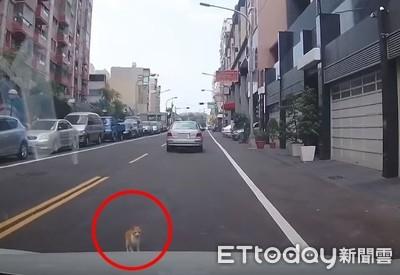 碰瓷橘貓攔車 暖男嚇掏肉泥賠償