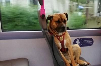 汪苦瓜臉搭公車 到站才發現牠被丟了