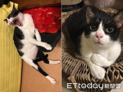 受虐貓咬她牙流血 1年後超黏人
