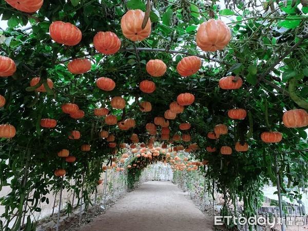 北部「4處萬聖節活動」免費玩!桃園南瓜隧道、萬聖城堡有光雕