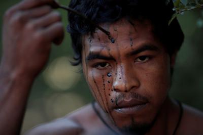 巴西「森林保衛者」被盜伐者槍殺