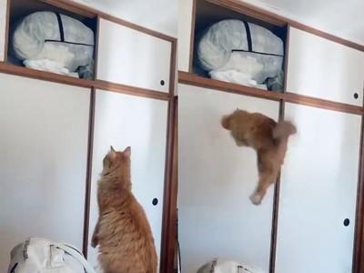 橘貓嘗試跳躍卻打滑!下秒撞櫃門
