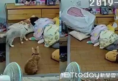 快起床!貓推行李箱害奴才腦震盪
