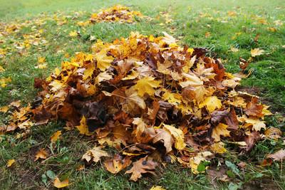 男忘情在停車場 性侵一堆樹葉