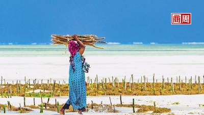 尚吉巴島 臨海的伊斯蘭世界