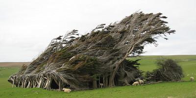 「極地之風」讓這些樹看來像抹了髮蠟