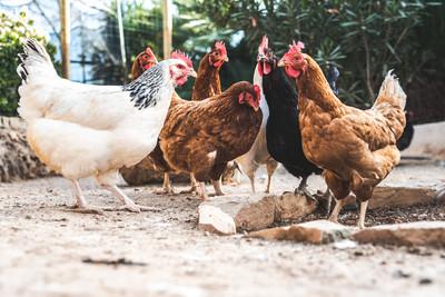 家人丈夫全死光 她為「4隻雞」告上法院