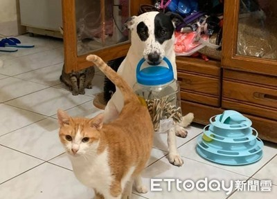 橘貓幫開櫃!狗叼整桶零食慘被抓