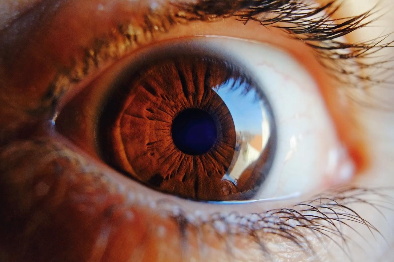 ▲▼眼睛,瞳孔,眼珠,眼睫毛。(圖/翻攝自pixabay)