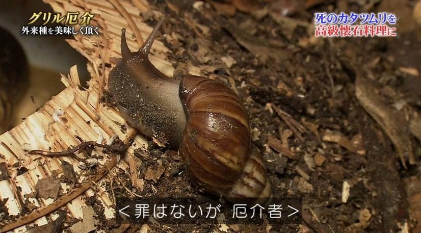 營養價值超高!螺肉其實是「非洲大蝸牛」 生吃小心引起滅門血案