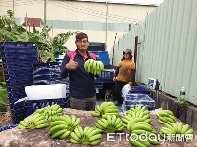栽種優質香蕉 賣到好價格