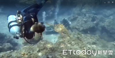 小琉球海龜「傑哥」製造假車禍