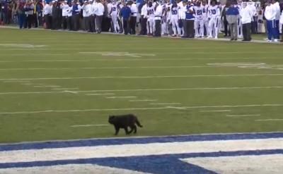 黑貓闖球賽成功達陣 戰局竟遭逆轉