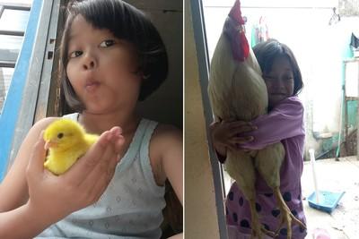 印尼推養小雞 改善兒童手機成癮