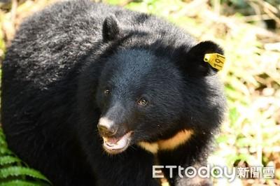拍到了!南安小熊出沒「有熊國」