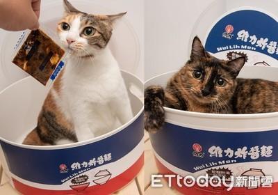 製作炸醬貓!拌完「三花→玳瑁」