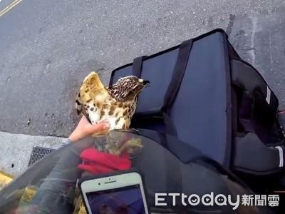 外送員抓老鷹 一問竟是保育猛禽