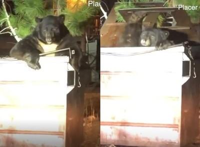 黑熊跌垃圾桶!警示範開蓋助脫困