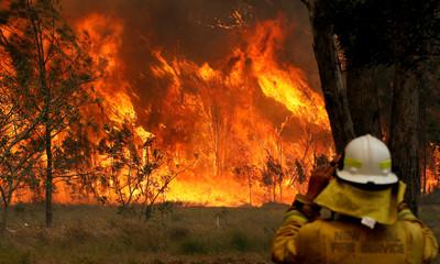 野火12日燒雪梨 3條件災難升等