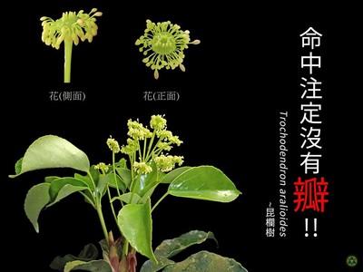 你絕對不是最慘!植物界提名最佳光棍獎