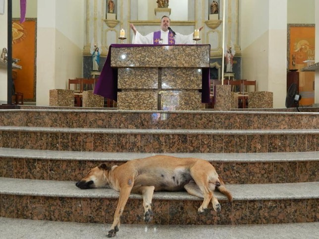 神父每週帶浪浪望彌撒!躺聖壇討摸摸 教友被萌翻全部收養
