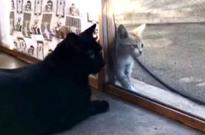 店貓狂叫!木匠循聲發現虛弱小貓