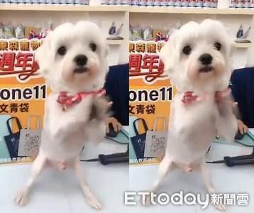 毛店長「雙手合十」慶寵物雲周年