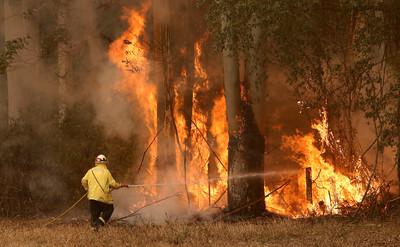 野火襲世界遺產 大藍山區20%被破壞