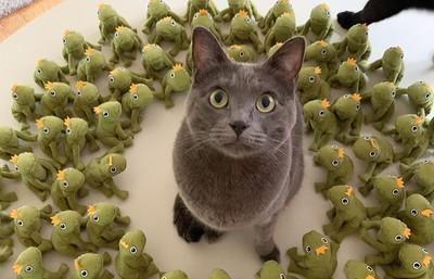 棄喵重生 4年後超帥領軍青蛙兵團