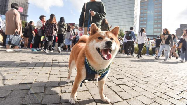 單身養狗被嗆「找不到伴侶」!研究調查:狗才最會招桃花