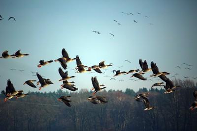 印度最大鹽湖 2400隻鳥屍排排躺