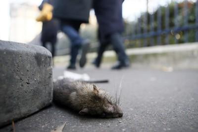 北京鼠疫釀病危 官方指擴散風險低