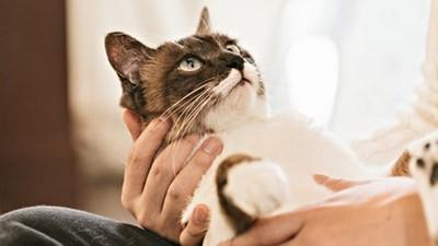 貓主子耳朵髒別輕忽!出現黑褐色耳垢、發出惡臭味 恐引發外耳炎