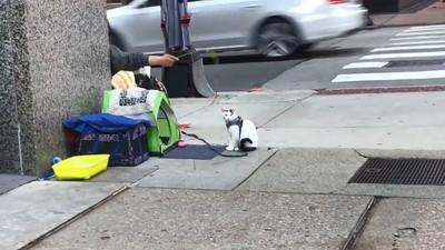 街友收養浪喵 陪路人閒聊竟get新工作