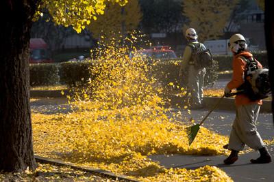 德政府:落葉吹風機會傷害昆蟲生態