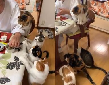 4貓伸「無影手」搶食!他秒征服