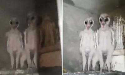 天花板住了外星人?專家一看打臉