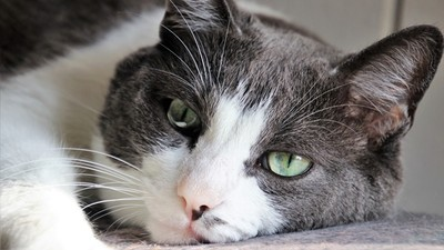 「同伴過世」貓皇也有會感!獸醫:沒食慾、叫不停都要注意