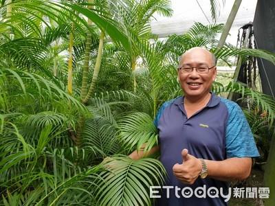 種黃椰子 林慶豐年外銷10萬片