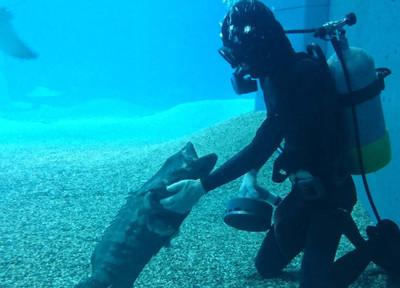 潛水員認真工作 石斑魚撒嬌討摸